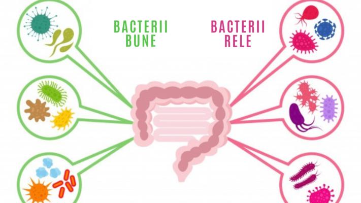 Infografic bacterii - probioticele