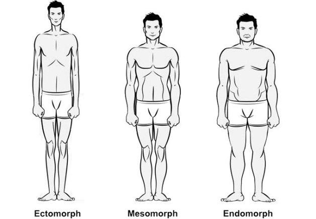 tipul somatic ectomorf, mezomorf, endomorf
