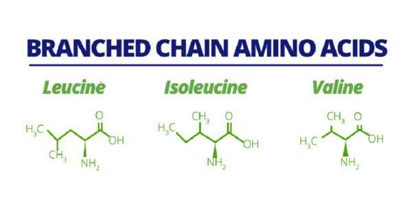 Lant amificat aminoacizi bcaa