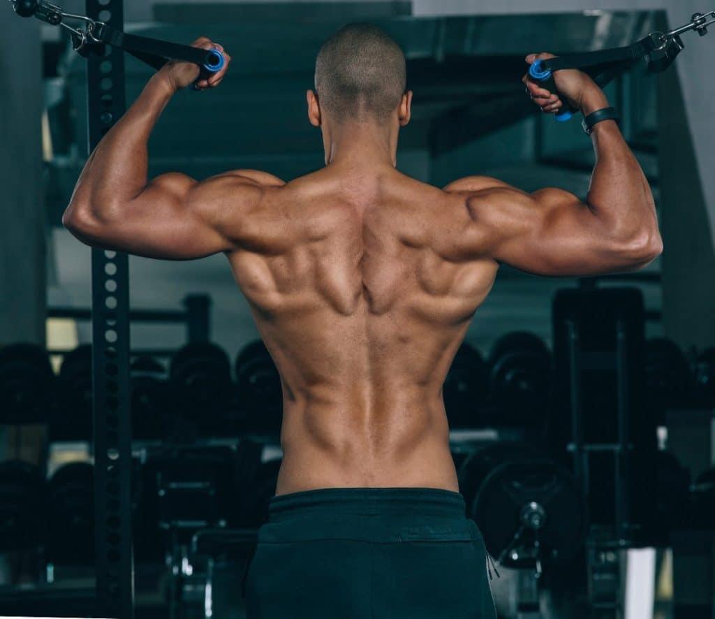 definirea musculara