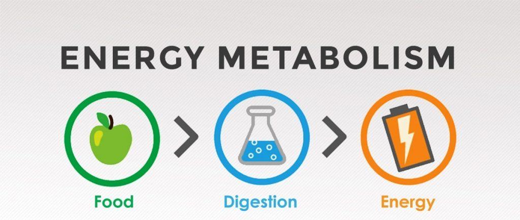 Energie - accelerarea metabolismului