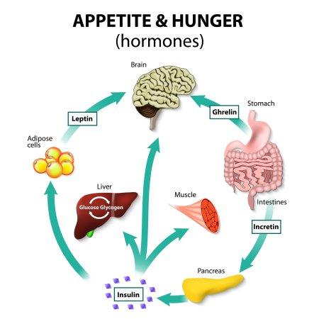 hormoni apetit crestere in greutate